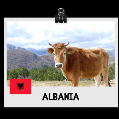 Albania Destination (1)